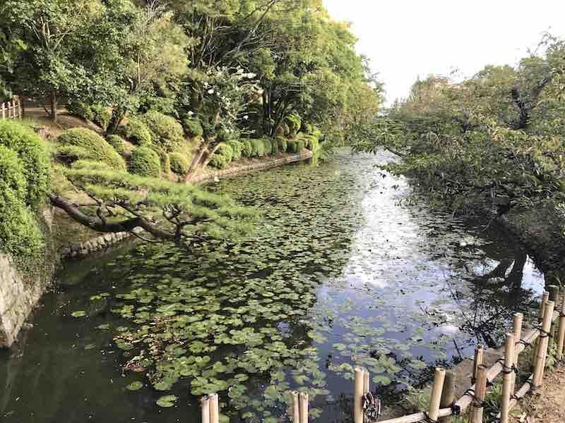 道後温泉 近く 池