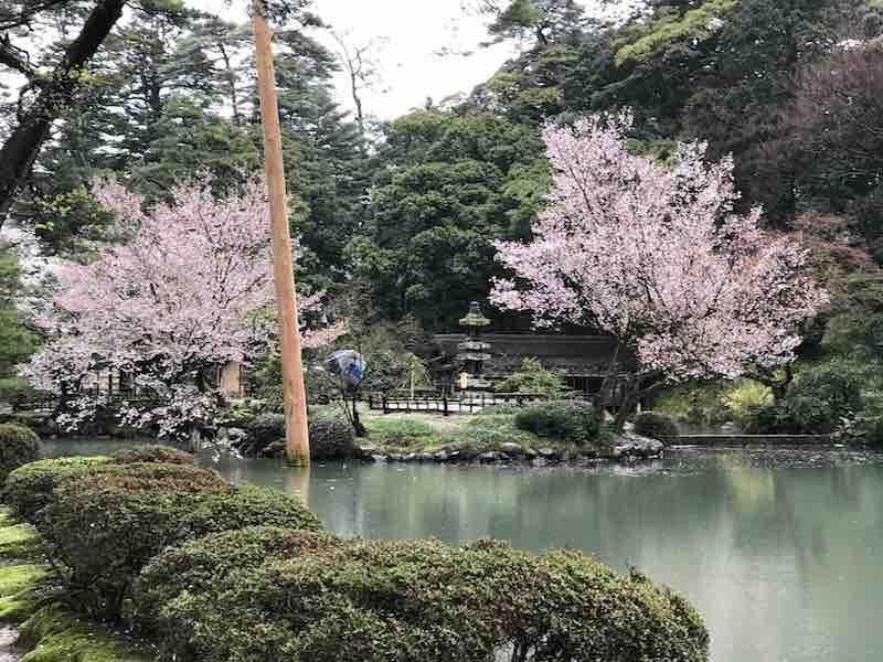 石川県 兼六園 この日は雨でした。
