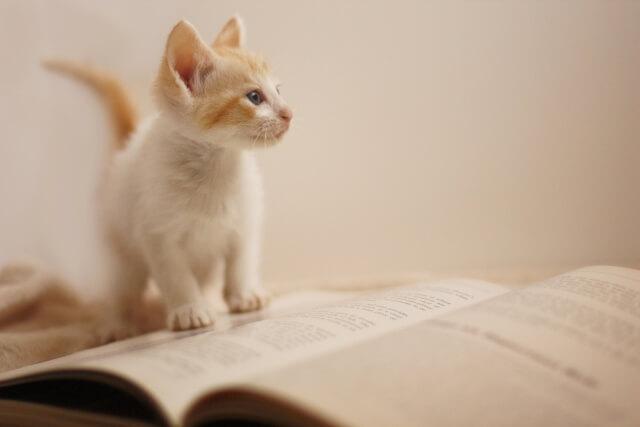 本の上の猫