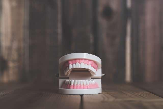 入れ歯の模型