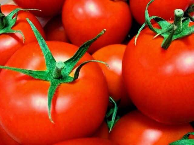 大玉のトマト