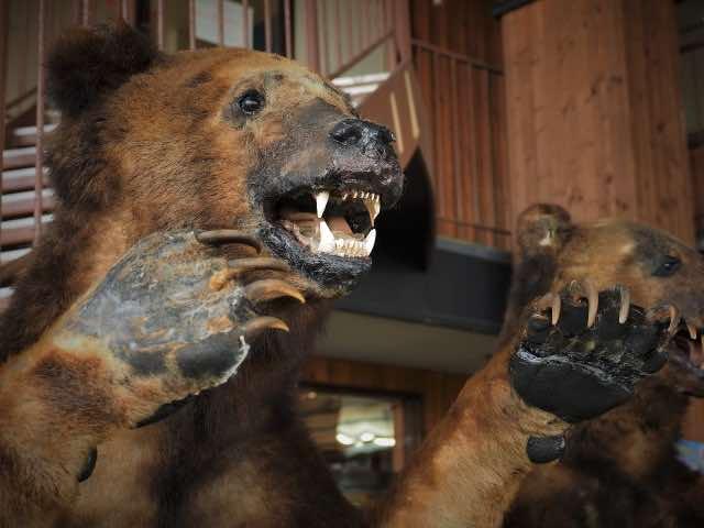 大熊の剥製