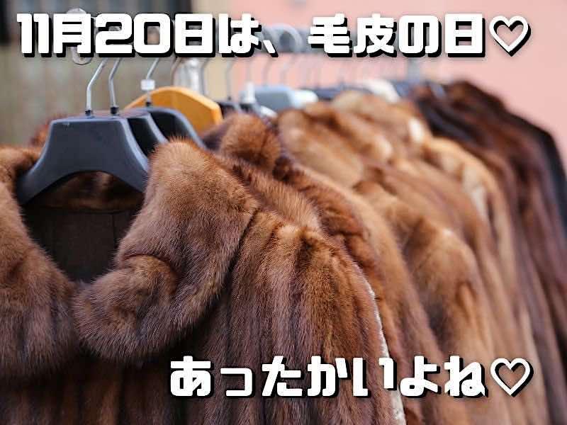 11月20日は毛皮の日
