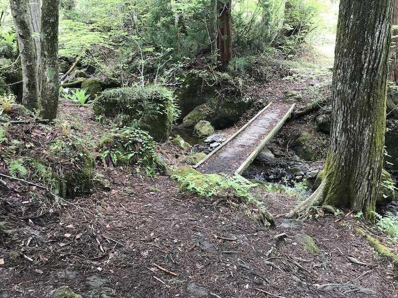 戸隠の木でできた橋