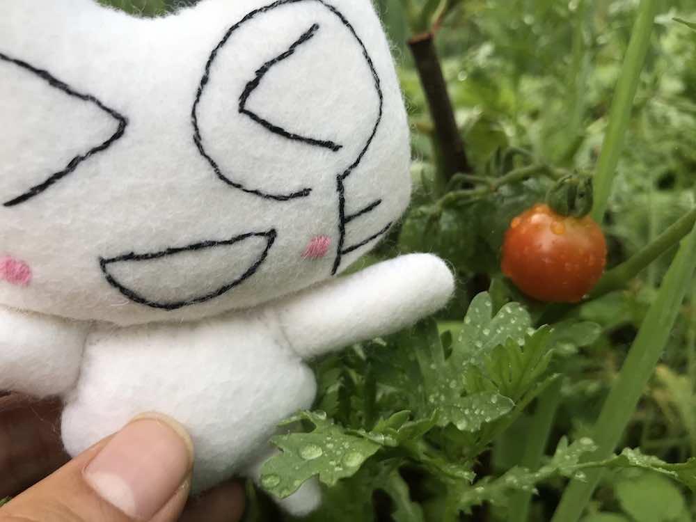 ニャタリーとミニトマト