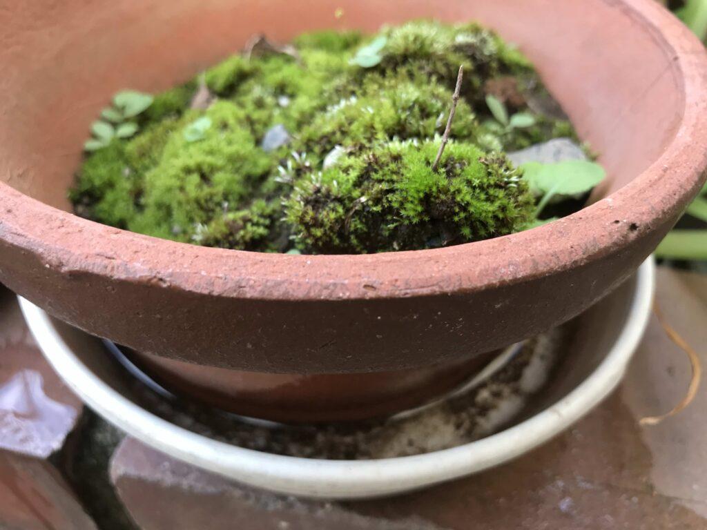 植木鉢と雨水の入った受け皿